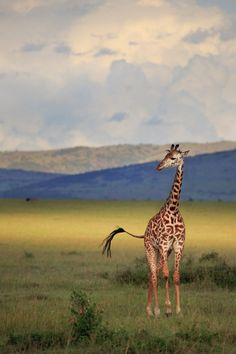 Light on the Mara (by Paul Marcellini)