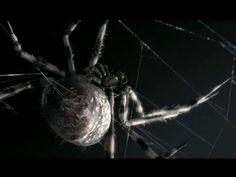 """CGI 3D Animated Short HD: """"Loom"""" by - Polynoid/Blacklist"""