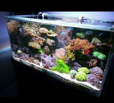 Saltwater Tank, Saltwater Aquarium, Salt And Water, Fresh Water, Amazing Aquariums, Marine Tank, Coral Tank, Reef Aquarium, Soft Corals