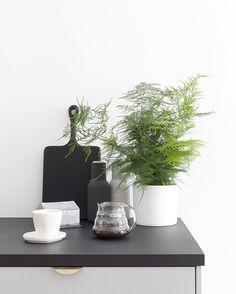 designer l blogger l interior stylist www.cocolapinedesign.com …