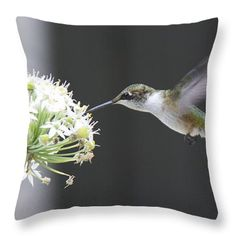 Magical Hummingbird Throw Pillow: by Marcela Martinez $25 http://instaprints.com/products/magical-hummingbird-marcela-martinez-throw-pillow-14-14.html