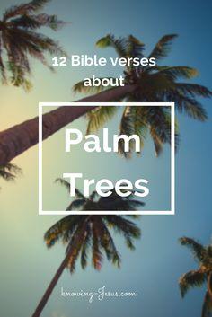 Palm tree Bible verses
