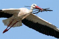 Stork Bird, Owl Bird, Pet Birds, Animals Are Beautiful People, Beautiful Birds, Kinds Of Birds, Love Birds, Cute Wild Animals, Animals And Pets