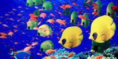 10 Incredibly Colorful Freshwater Aquarium Fishes #fish #aquarium