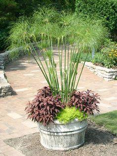 deck planters. Papyrus grass and purple potato vine!
