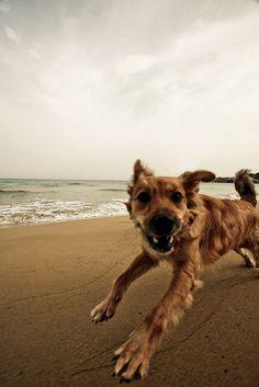 Freedom is a #summer run on the beach! #Dogs #BeachPups