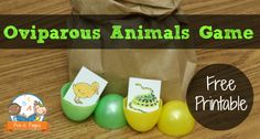 Learning about Eggs - Fun, hands-on game to help your preschool or kindergarten students learn about oviparous animals. Includes a free count, tally, and graph printable.