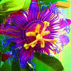 Passiflora by VBKdesigns on Etsy