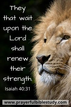 Prayerful Bible Study strives to build up God's children on the solid Rock we know to be Jesus Christ. This is accomplished with a disciplined prayer life and diligent study of the Scriptures. Bible verses for strength Biblical Quotes, Bible Verses Quotes, Bible Scriptures, Healing Scriptures, Bible Teachings, Faith Quotes, Bible Verses About Strength, Bible Words, Lion Bible Verse