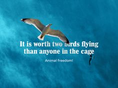 #09 - 30 days of creativity for good - It is worth two birds flying than anyone in the cage.  Animal freedom!