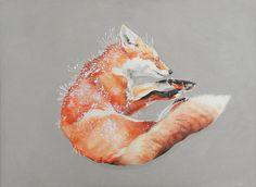 Red Fox, June 2010, ©Melinda Josie