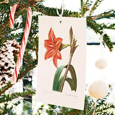 Using favorite cards and postcards as ornaments will make your Christmas tree look great and personal: http://www.bhg.com/christmas/ornaments/easy-christmas-ornaments/?socsrc=bhgpin120613postcardornaments&page=9
