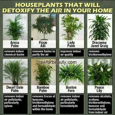Air cleaning House plants...always good to know.