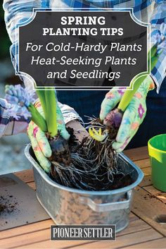 Planting Tips For Spring Cold-Hardy, Heat-Seeking, and Seedlings | Try Many Types Of Farming For You And Your Homestead