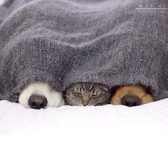 【情報】抱來抱去的毛絨絨貓狗家族 @幸福寵物交流區 哈啦板 - 巴哈姆特