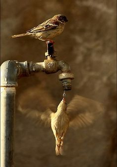 ...Wings in motion...bird on a tap and a hummingbird getting a drink.