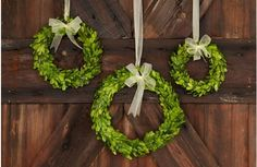 Preserved Boxwood Wreaths with Ribbon Trim - decor steals (one decor deal a day)~Enjoy Today's Steal from DECOR STEALS