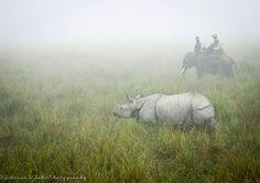 Kaziranga and Nameri National Parks, Assam
