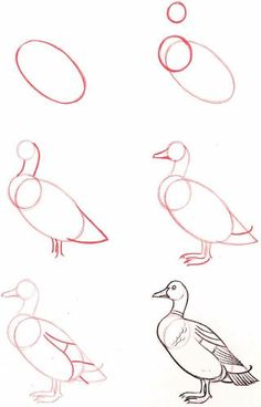Easy Drawings Drawing-Tutorial-for-Occasional-Artists - While there are tons of things out there to draw, it is not simple always. However, these Drawing Tutorial for Occasional Artists will help you out. Bird Drawings, Pencil Art Drawings, Art Drawings Sketches, Easy Drawings, Animal Drawings, Art Illustrations, Duck Drawing, Drawing For Kids, Painting & Drawing