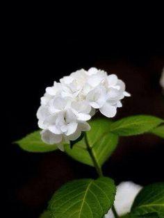 Flor 132