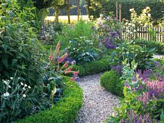 Low box hedging contains the unstructured border planting of poppies, salvia and foxgloves,a technique appropriate for front yards, where greater order may be required.