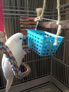 ♥ Pet Bird DIY Ideas ♥ Genius DIY Bird Toy Ideas – Parrot Stands