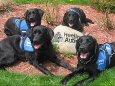 Graduates of Guiding Eyes' Heeling Autism program. These service dogs help children with autism. Amazing!