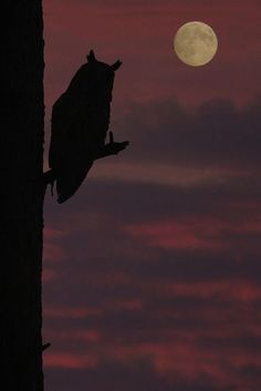 Moon & Long Eared Owl