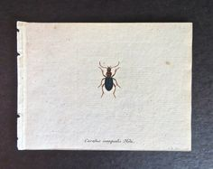 18th Century Antique French Insect by DuncanGrantAntiques on Etsy
