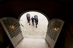 This is a great shot taken from the loft of two Friesians being led into the stable across the cobblestone courtyard.