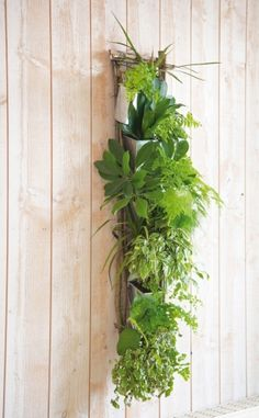 Diy un mur v g tal en bois de palette jardin deco pinterest bricolage - Mur vegetal interieur diy ...