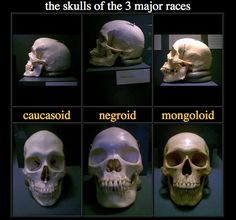 Think, that Skull structures different races