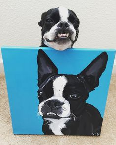"""Minniethebostonterrier on Instagram: """"A huge thank you to the talented @_thedogdays_ for this beautiful portrait of Minnie! Victoria will paint your pup for you at your request! Please check her website out for more details!!! """""""