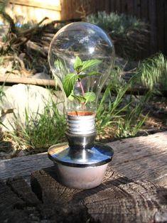 Ideas originales para el reciclaje de bombillas tradicionales.