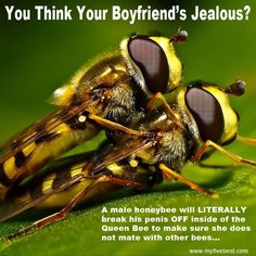 18 Weird Animal Mating Rituals That Give A Whole New Meaning To Wild Sex Bees And Wasps, Birds And The Bees, Macro Photography, Animal Photography, Bee Do, Widescreen Wallpaper, Wallpapers, Animal Wallpaper, Animals