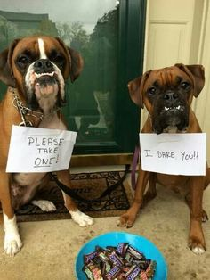 this is my boxer girlu0027s sister and nephew