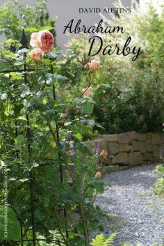 Glücklichmacher... - Ein Schweizer Garten
