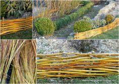 Weiden+flechten+Flechtzaun+Einfassung+Salix+.jpg 800×566 pixels