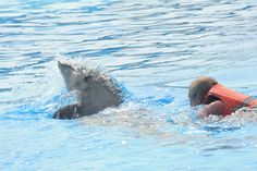 Swim with dolphins in Friguia Park Tunisia  #Swim with #dolphins in #Friguia #Park #Tunisia