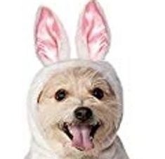 dog accessories, clothing and Bling! Easter Outfit, Themed Outfits, Pet Costumes, Dog Dresses, White Hoodie, Dog Accessories, Dress For You, Cute Dogs, Teddy Bear