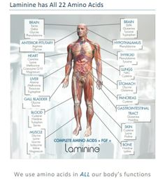 "Tired of visiting the doctor and spending extra money for ""drugs""? Laminine helps keep your body in normal stasis and avoid all the ""unnecessary drugs"" and visits."