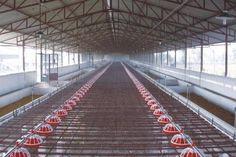 Services: Farm Equipment Sales, Farm Equipment Supplier, Maintenance, Fabrication, Machining, Farm Equipment Repairs, Hydraulic Sales,Hose Sales,Grain Bin Sales, Grain Handling Equipment Sales, Grain Dryer Sales,Intelliair Temperature Cable Sales