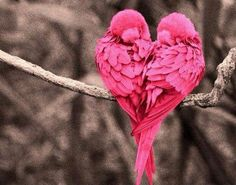 """Find and save images from the """"Animales, aves, etc."""" collection by Un tal Daro (Diesgo) on We Heart It, your everyday app to get lost in what you love. Pretty Birds, Love Birds, Beautiful Birds, Animals Beautiful, Cute Animals, Pink Animals, Beautiful Live, Pretty Animals, Birds 2"""