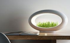 The Modern Desktop Garden