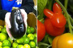 fruits et légumes moches se rebellent pour vous étonner ! ugly fruit and vegetables