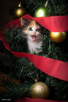 """ O Christmas tree, O Christmas tree, me humans gonna yells at me..."""
