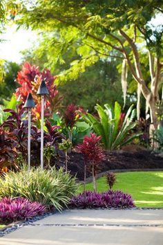 Tropical garden - Hawaii, When . - Tropical garden – Hawaii, When caring for exotic - Tropical Garden Design, Tropical Backyard, Garden Landscape Design, Green Landscape, Tropical Plants, Purple Plants, Tropical Gardens, Landscape Plans, Pool Plants