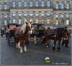 Smile Amsterdam City, Louvre, Horses, Smile, Building, Travel, Viajes, Buildings, Horse