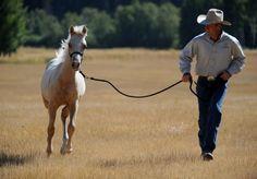 Foals, Weanlings, & Yearlings: Getting Started