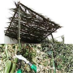 #recyclage #cop22 #Casablanca #FellahUrbain #permaculturecasablanca #permaculture  du bambou. des feuilles de palmier. un sécateur. des vis à avec écrous.  2 après - midis. et voilà une pergola construite à partir de matériaux naturels jettés.  bamboo. palm leaves. secateurs. screws with nuts. 2 after - noon. and here is a pergola built from natural materials throw.  Merci à Jad pour le coup de main à l'étape de fixation de la #pergola